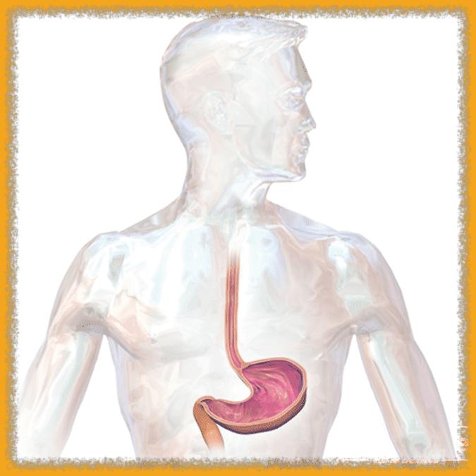Les effets du lait de chamelle sur les ulcères 2