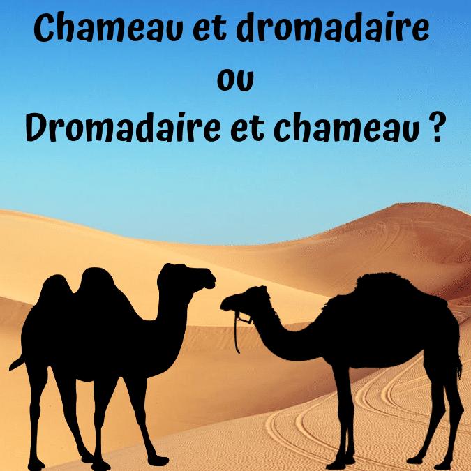 Chameau ou dromadaire ?