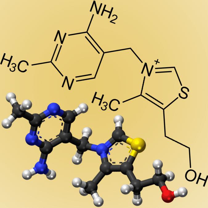 vitamine B1 chameau lait de chamelle camel-idee