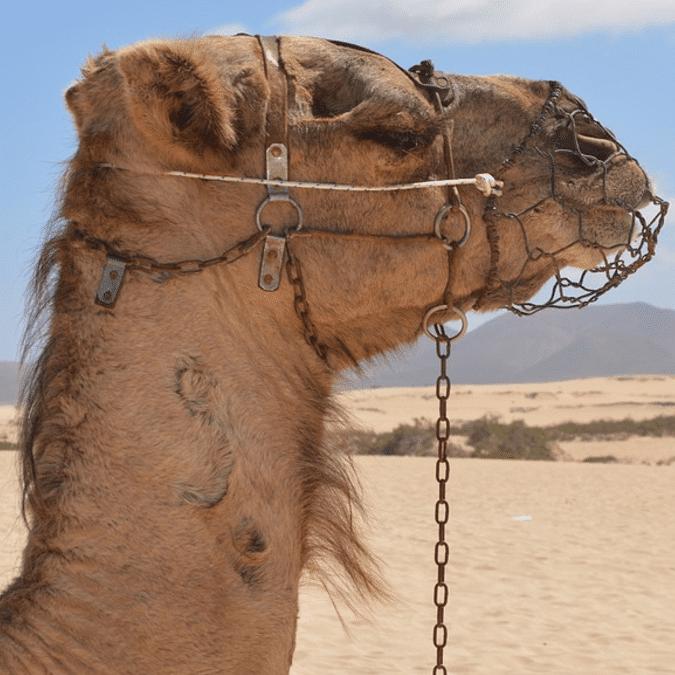Fuerteventura une révolution